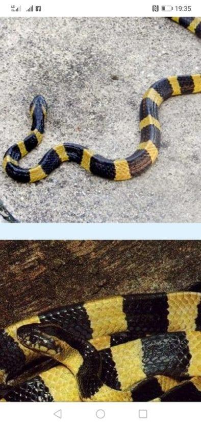 В Днепре появилась очень ядовитая змея, которая может убить каждого, - соцсети