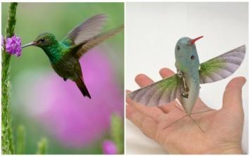 Робот-колибри заменит беспилотники? Ученые создали дрон, способный летать как самая маленькая птица